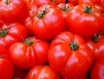 無料画像 トマト