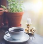 コーヒーと鉢植え