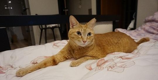 猫3DSC01304