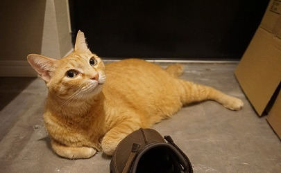 猫1DSC01677