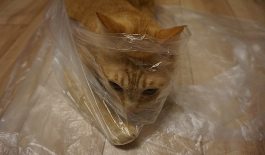 猫3DSC01846