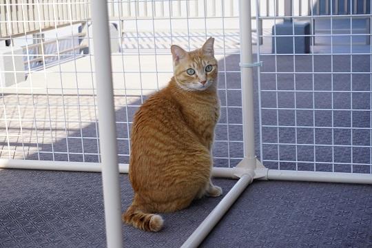 猫2DSC02415