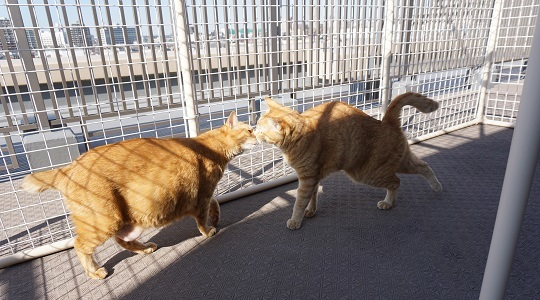 猫3DSC02425