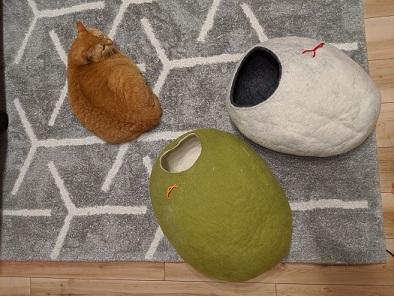 猫1IMG_20191204_194940