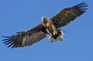 eagle-1753002_640.jpg