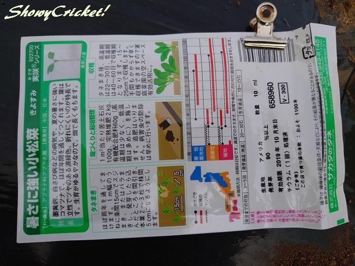 2019-10-01小松菜 (2)