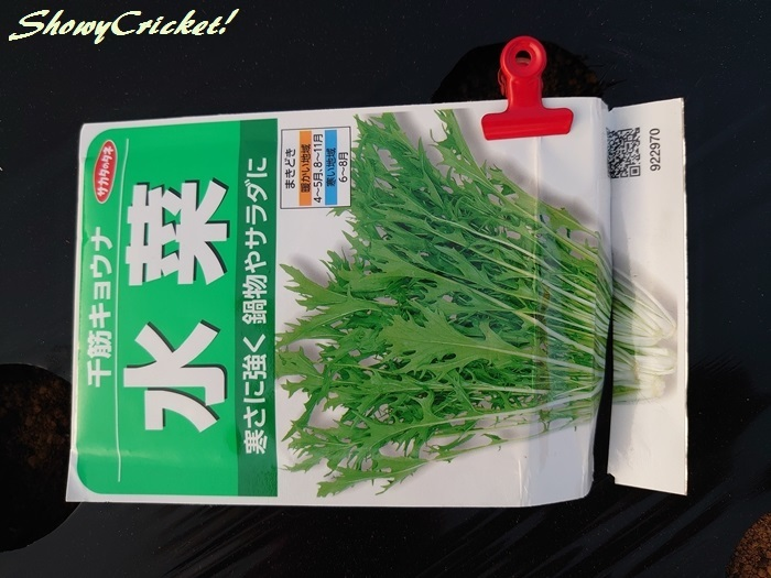 2019-10-01水菜 (2)