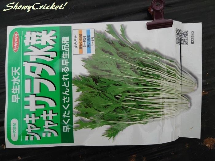 2019-10-06水菜 (1)