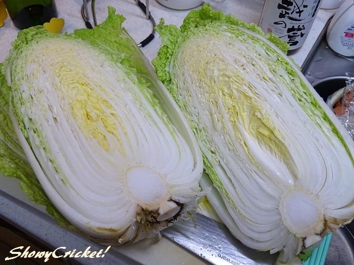 2019-12-30白菜 (25)