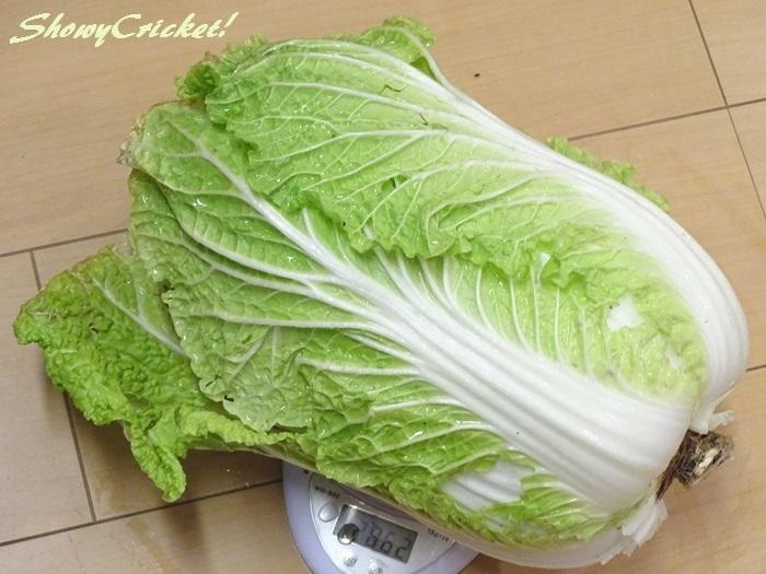 2020-01-15白菜 (4)