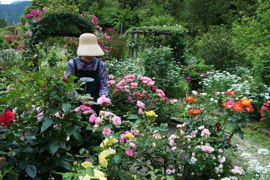 20200527 花がら摘み