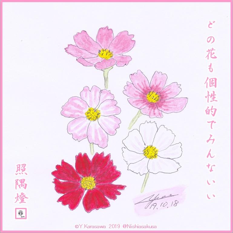 191018秋桜LRG