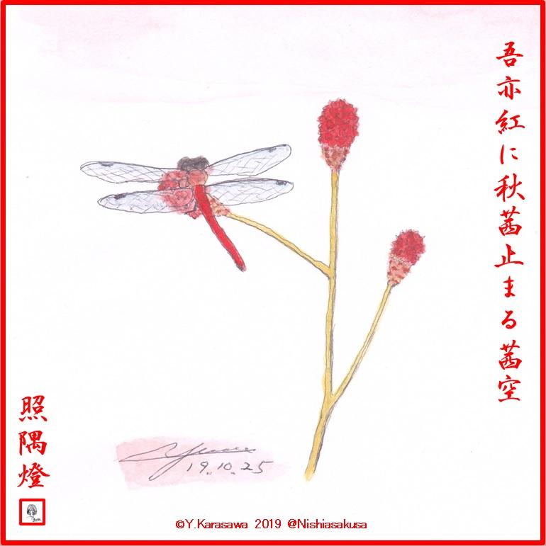 191025吾亦紅にアキアカネLRG