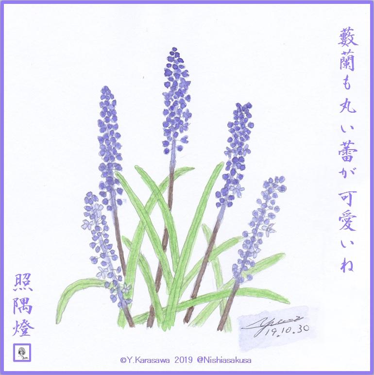 191030藪蘭LRG