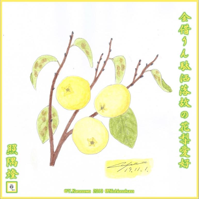 191101花梨の実LRG