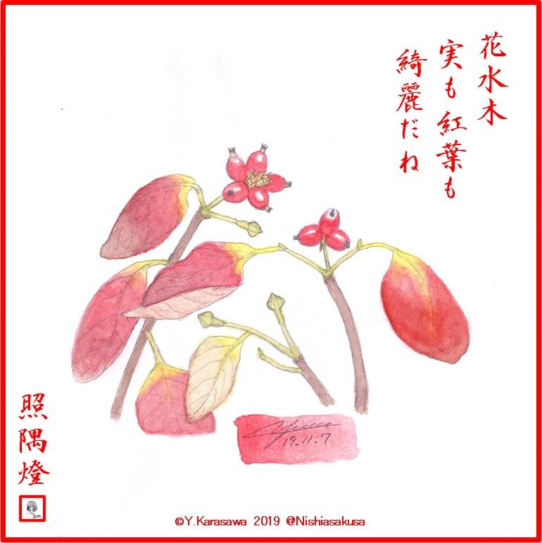 191107花水木の実LRG
