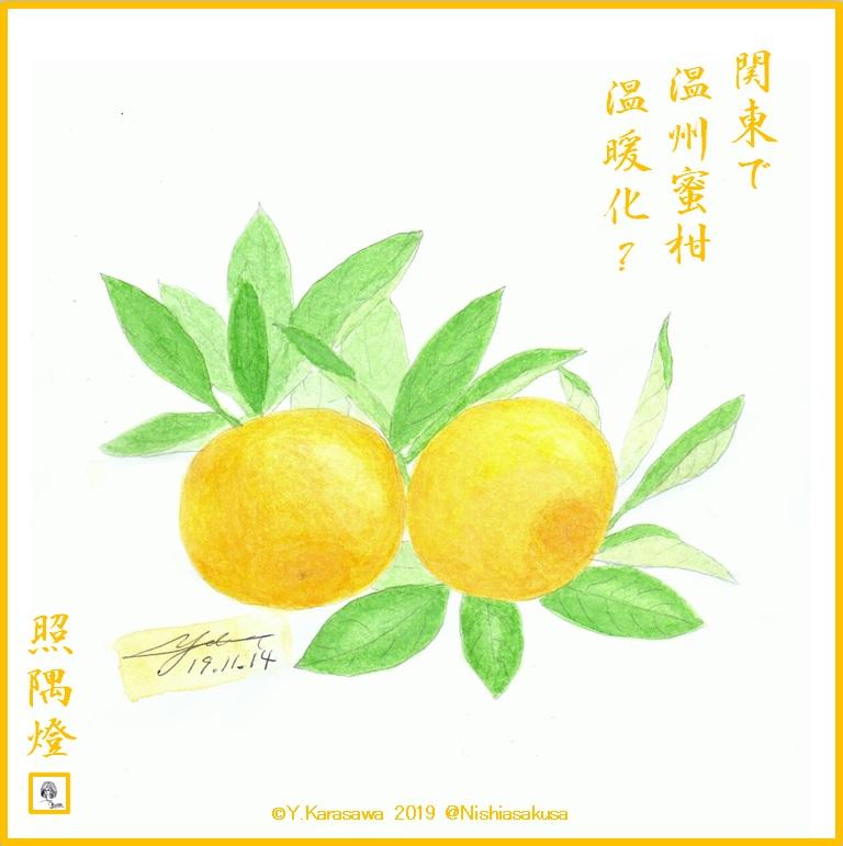 191114温州蜜柑LRG