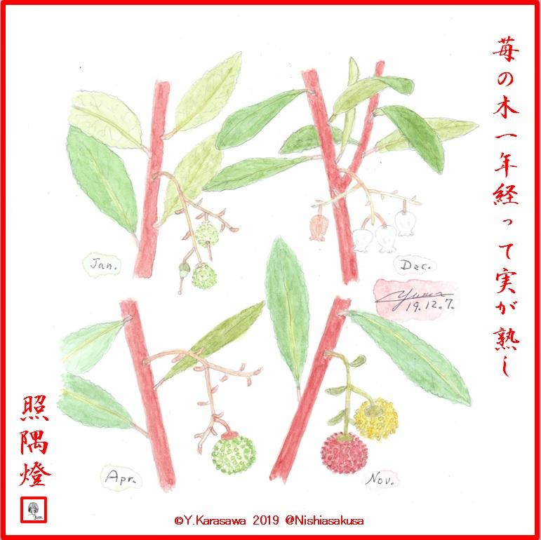 191207苺の木LRG