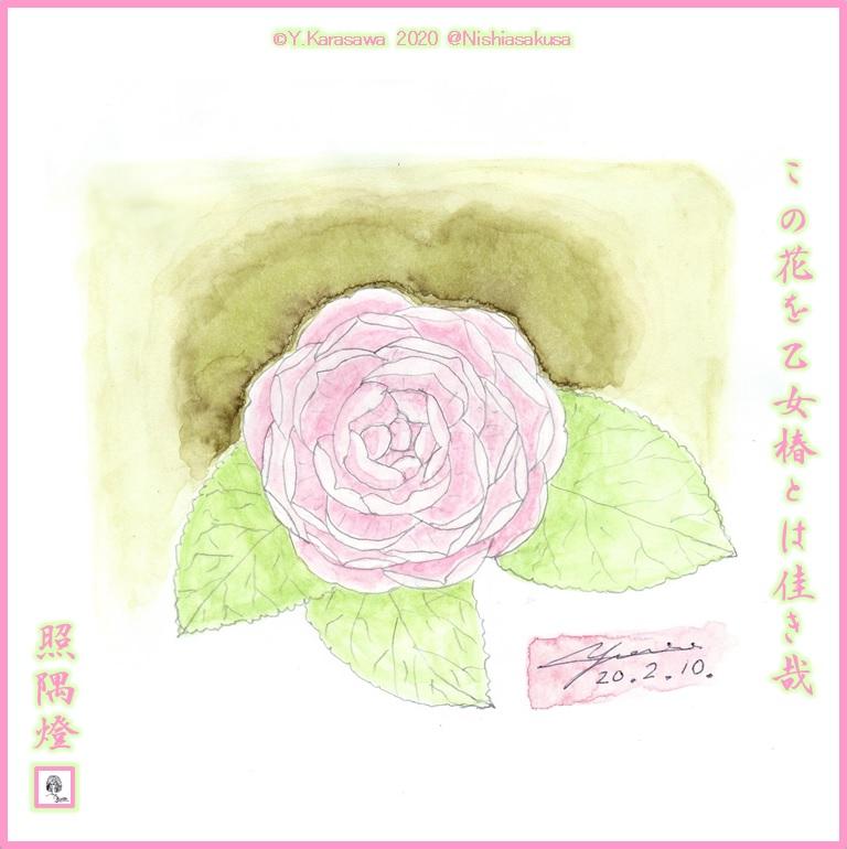 200210乙女椿LRG