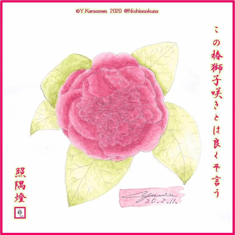 200211獅子咲椿薔薇色LRG