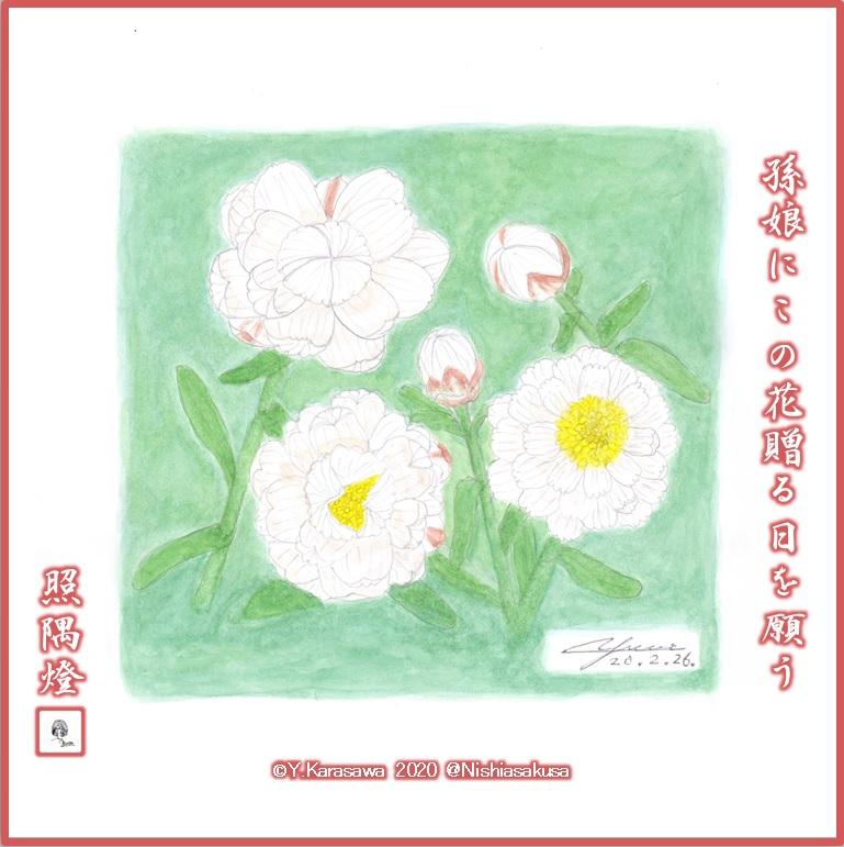 200226花かんざしLRG