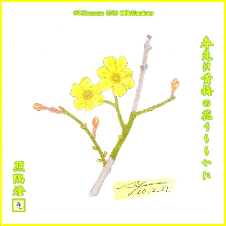 200227黄梅LRG