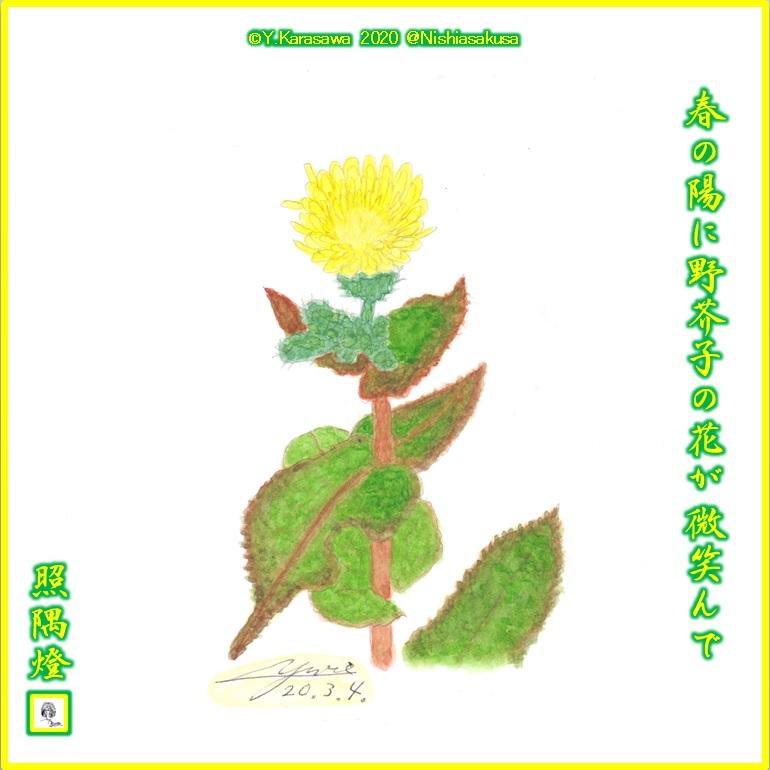 200304野芥子LRG