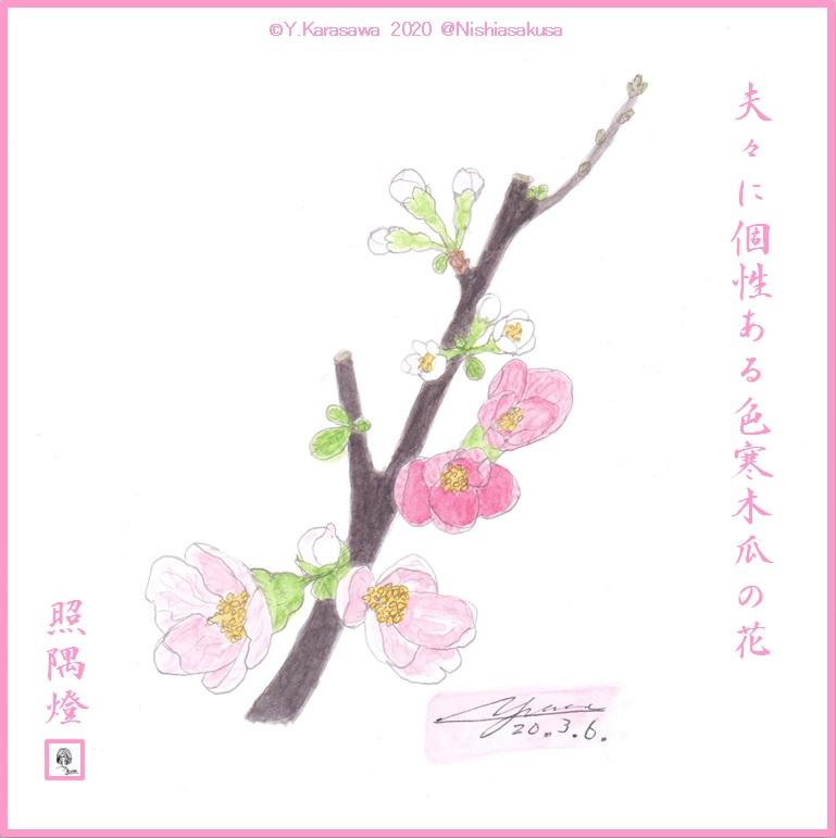 200306寒木瓜の花LRG