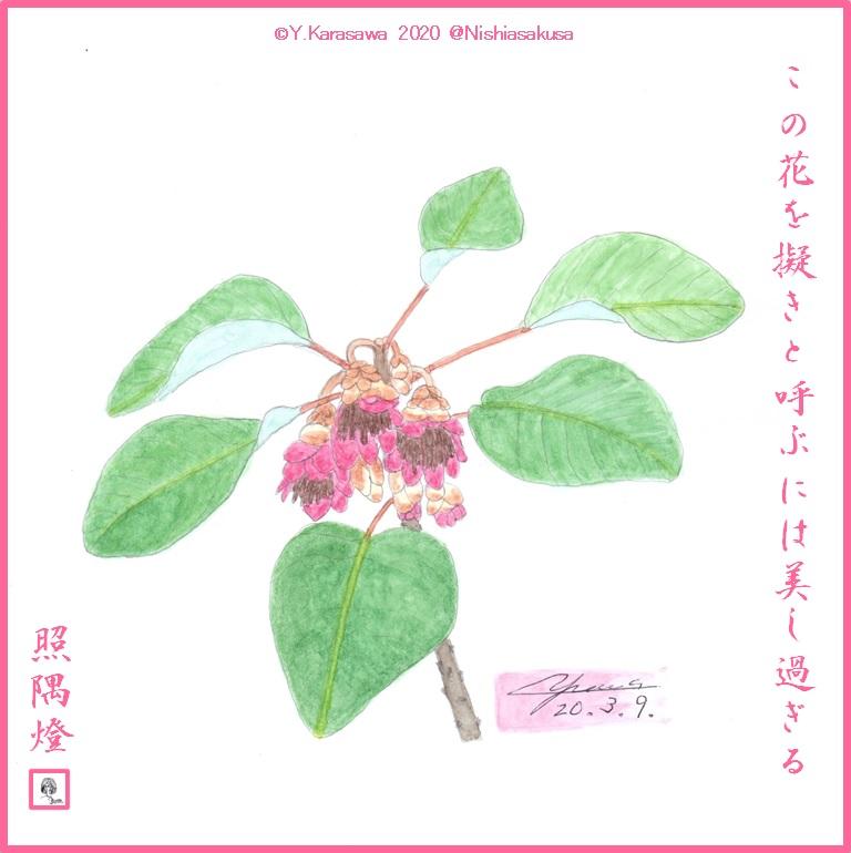 200309石楠花擬LRG