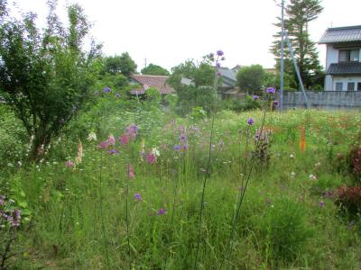 200530空き地は花盛り
