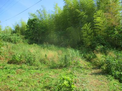 200602伸びた筍伐採