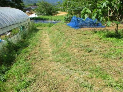 200602草刈り