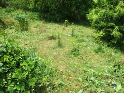 200604畑奥の草刈り