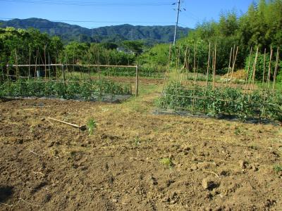 200607空の畑の様子1