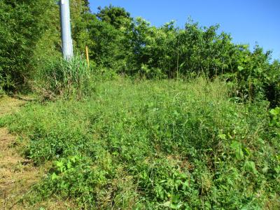 200607北側の草刈り1