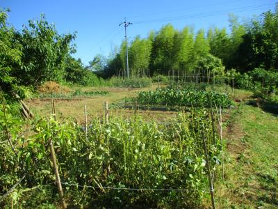 200607空の畑の様子2