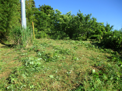 200607北側の草刈り2
