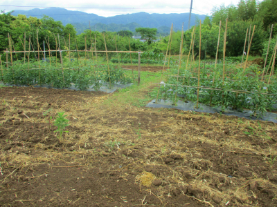 200612そらの畑