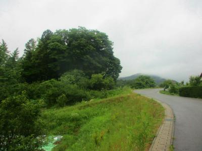 200626小雨の散歩道