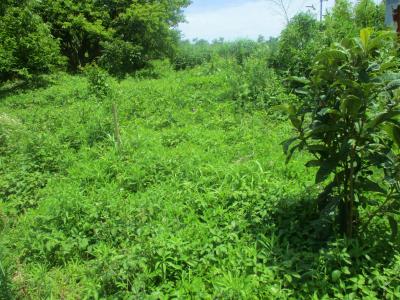 200627耕作放棄地との境界は草だらけ
