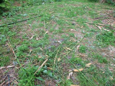 200627畑北側の竹伐採