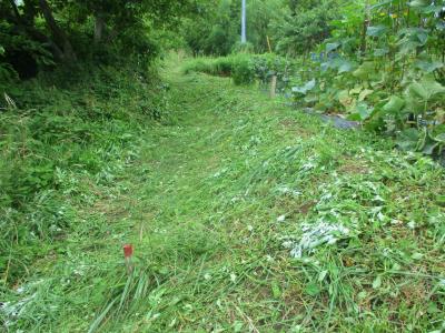 200703参道の草刈り