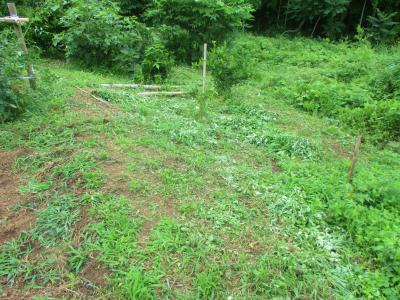 200703南側法面の草刈り