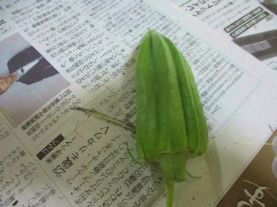 200716ダビデ収穫