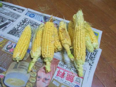 200716トウモロコシ収穫
