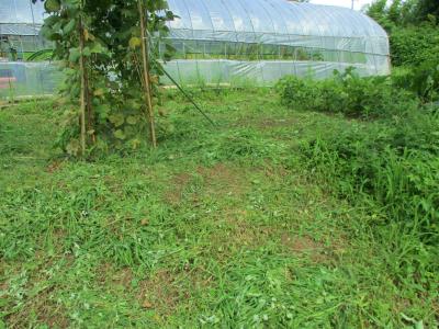 200718ハウス下の草刈り