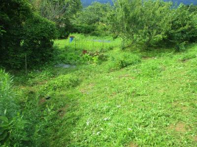 200718法面・栗の木下の草刈り