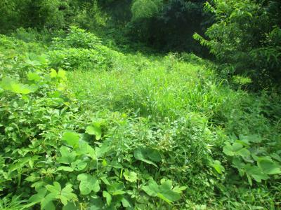200718畑奥の草