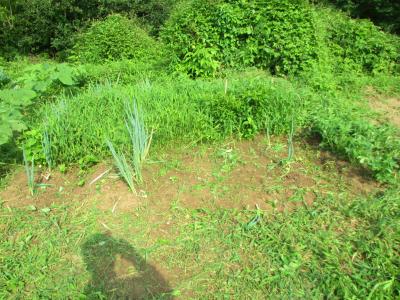 200718落花生付近の草取り