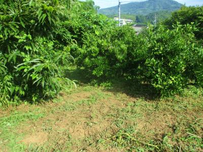 200720果樹の間の草刈り
